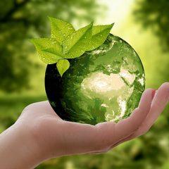 Fundación Picarral: Acción social sostenible